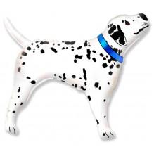 Далматинец стоящий - профиль / Real Dalmatian